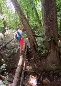 Przejście przez strumyk w dżungli