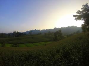 Pole kukurydzy oraz górskiej odmiany ryżu przy wiosce Karenów