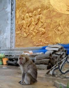 W Kambodży małpki są wszędzie!