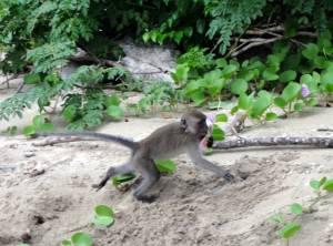 Uciekająca małpka z puszką :D
