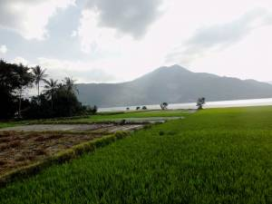 Na wyspie Samosir