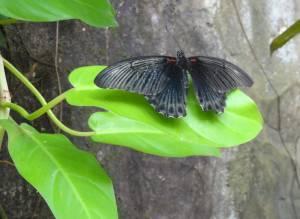 Park Motyli na wyspie Sentosa
