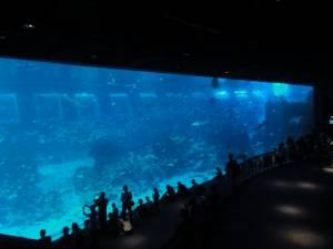 18 000 000 litrów słonej wody!