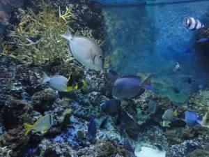 Akwarium w Singapurze naprawdę warto odwiedzić!
