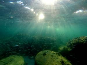 Nawet blisko brzegu wodne życie jest intersujące!