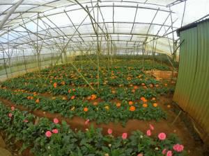 Plantacja kwiatów