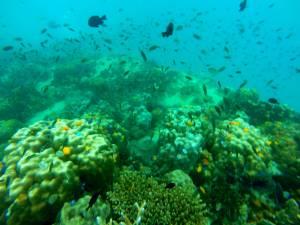 Niesamowity podwodny świat!
