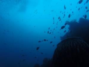 Podwodny świat przy wraku USS Liberty
