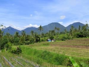 Pola ryżowe, wulkany, góry - jest pięknie!