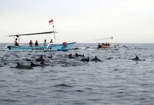 Całe stado! (szkoda tylko, że łódek z turystami było jeszcze więcej niż delfinów)