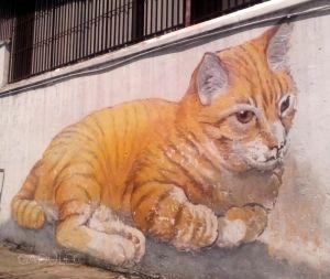 Jeden z wielu ulicznych kotów!