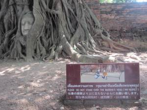 Słynna głowa Buddy uwięziona w korzeniach