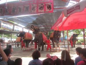 Występ słoni w Ayutthaya