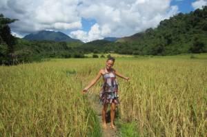 W polu ryżowym