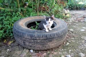 Kotków w Azji jest tysiące! Najsłodsze :)