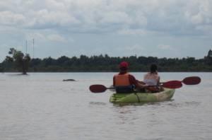 Tyle widzieliśmy delfina rzecznego :D