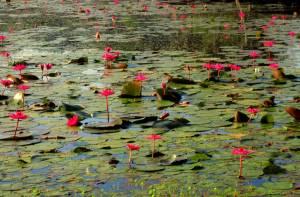 Takie cuda odkryliśmy na jeziorze przed Angkor Wat