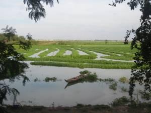 Pola ryżowe otaczają miejsce mordu tysięcy osób...