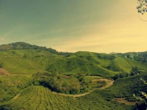 Sungai Palace Tea Estate