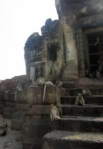Małpi gang w Wat San Phra Kan