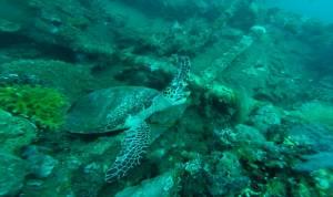 Ziewający żółwik!