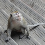 Uważajcie na małpki w Batu Caves! Jest ich mnóstwo!