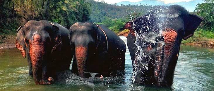 slonikiii