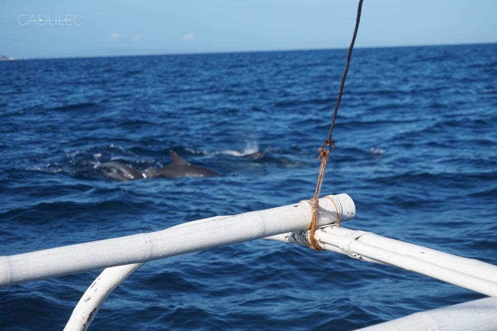 ...albo podglądnąć delifinki!