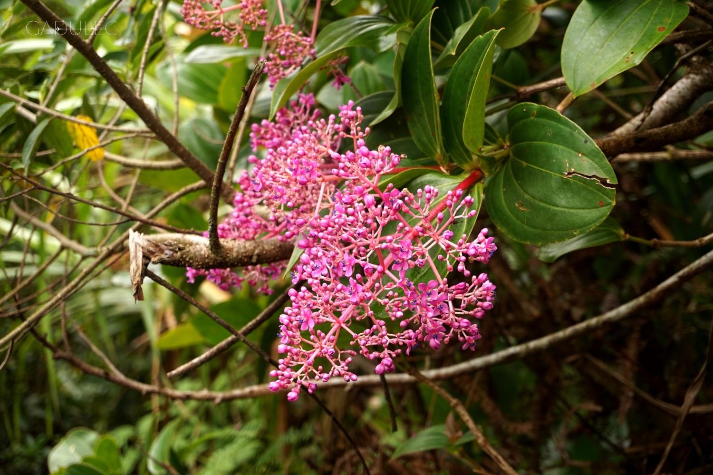 Kwiaty, które występują tylko w tym regionie