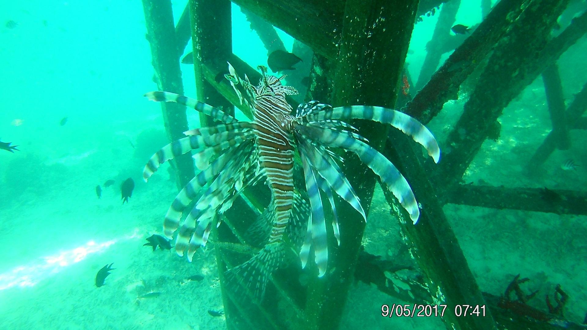 Podwodny świat na Angel Island