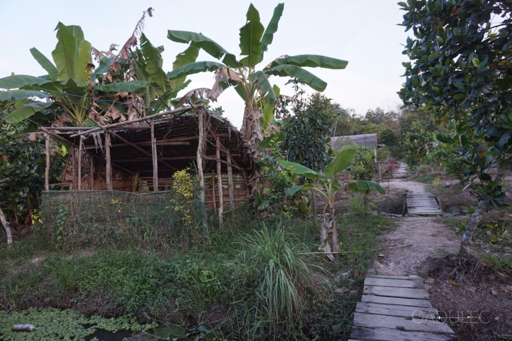 Przydomowy ogródek