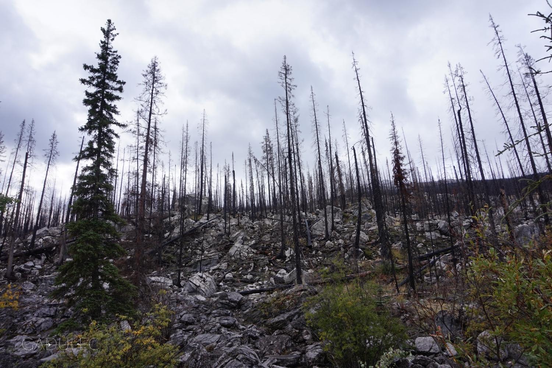 W te wakacje płonęło mnóstwo lasów w Albercie