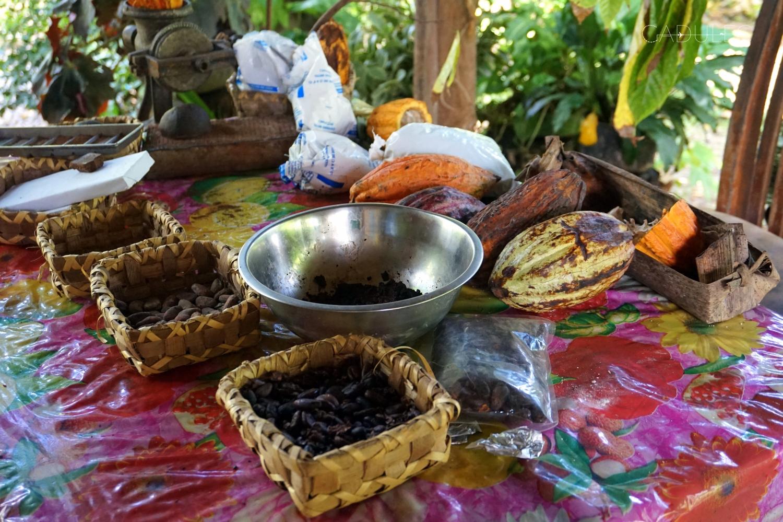 plantacja-kakao-Kuba