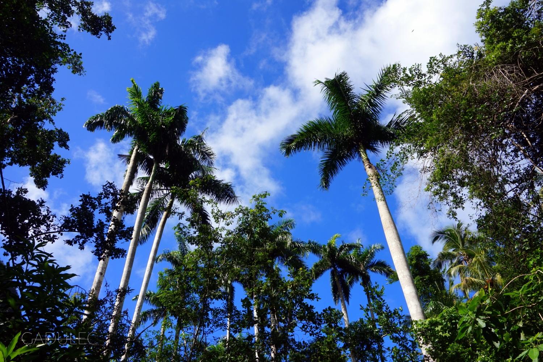 Baracoa-okolice