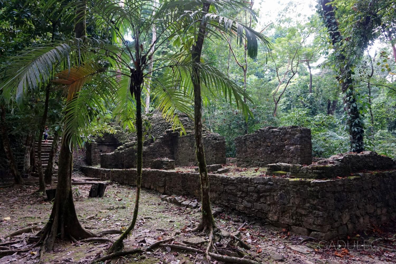 palenque8