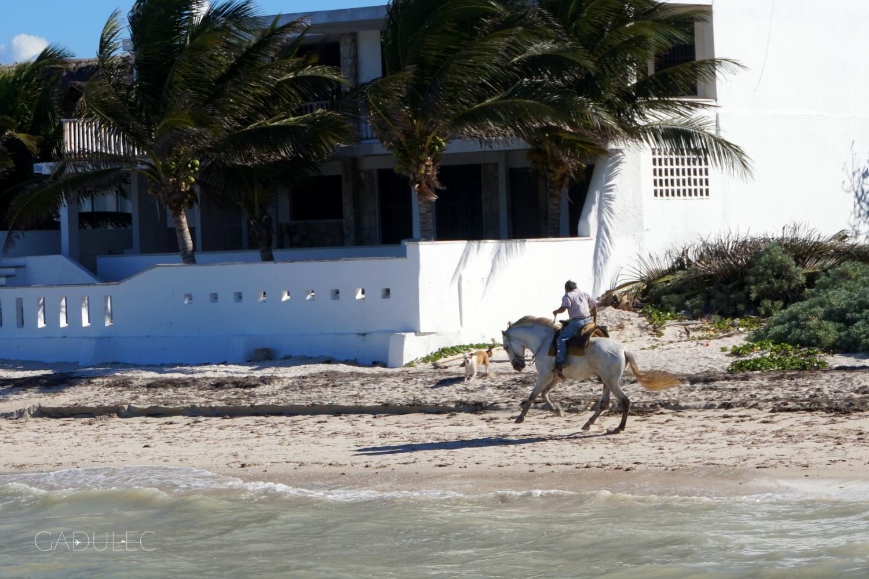 Plaża koło Progreso