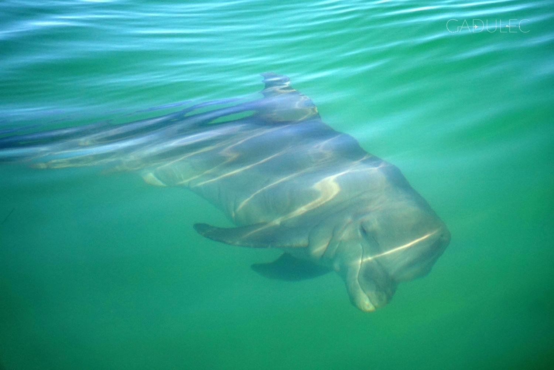 punta-allen-delfin