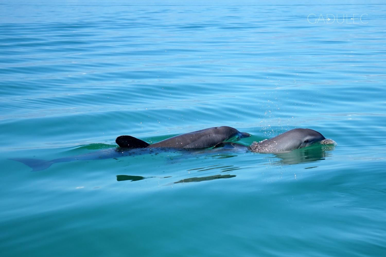 punta-allen-delfiny