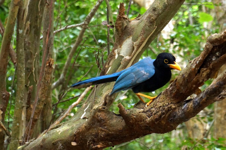 tulum-ptak