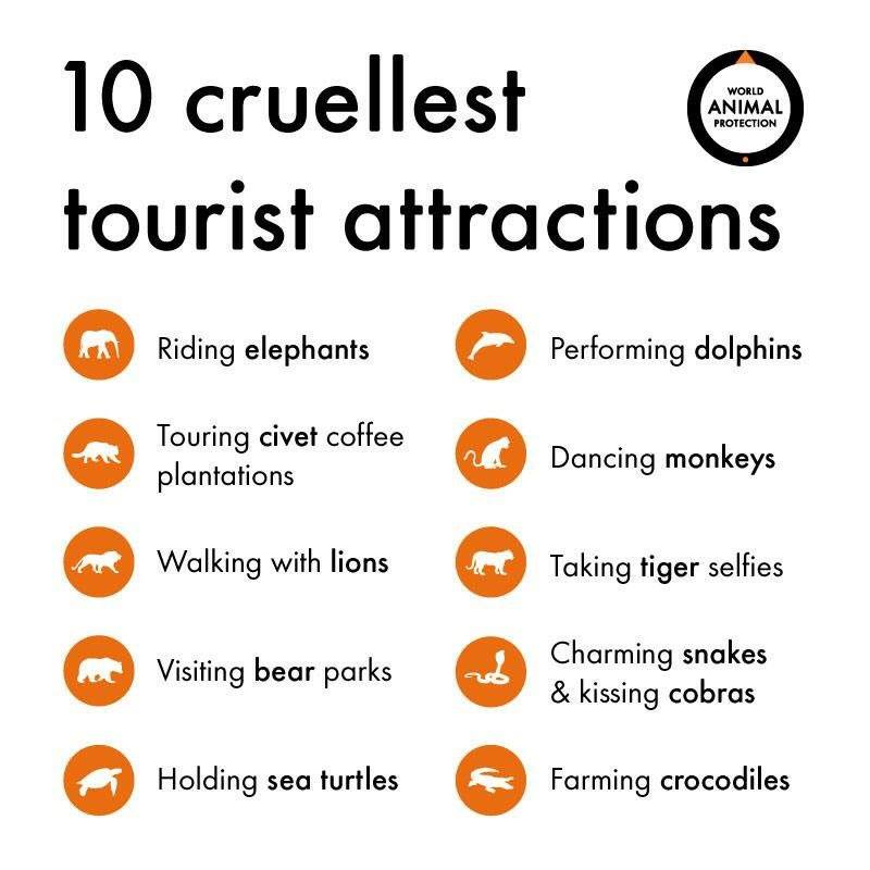 animal-attractions
