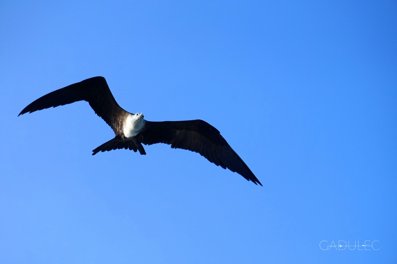 ptak-Belize