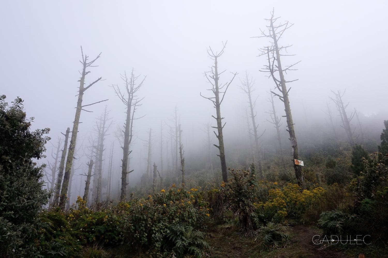 trekking-Acatenango