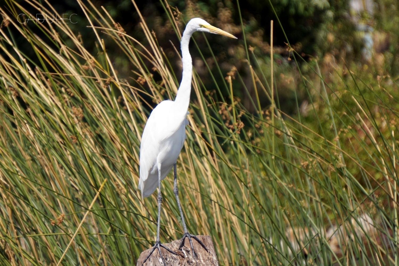 Jezioro-Atitlan-ptak