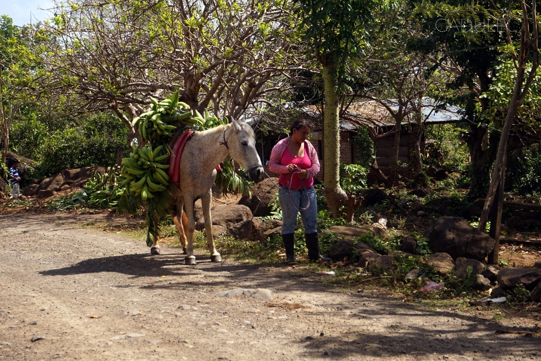 Mieszkańcy Ometepe pracują w turystyce, przy hodowli bydła oraz na plantacjach bananów.
