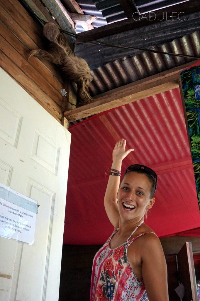 Proszę Państwa, oto leniwiec!