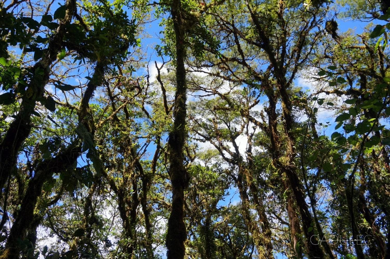 Las mglisty w Rezerwacie Bosque Nuboso Santa Elena