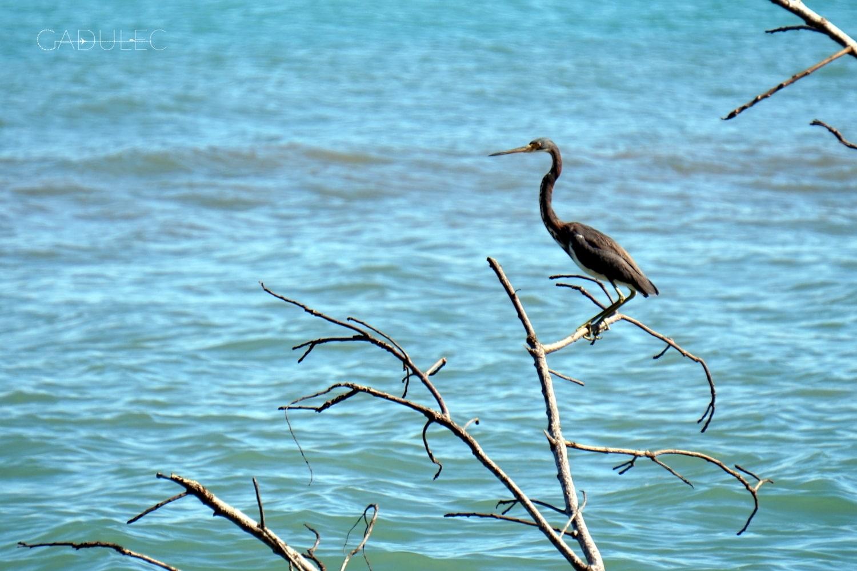 cahuita-ptak