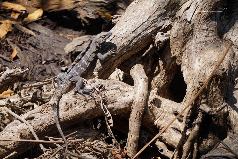 Zwierzaki w Parku Narodowym Manuel Antonio