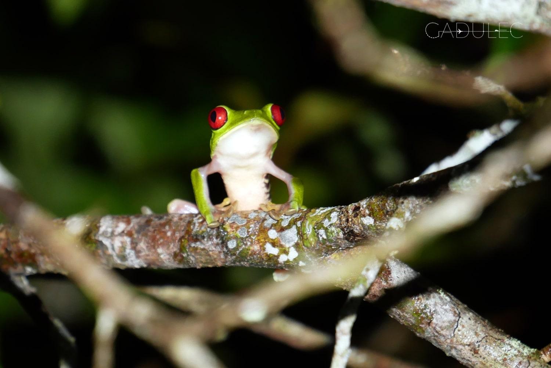 Te żabki są naprawdę hiper-fotogeniczne!