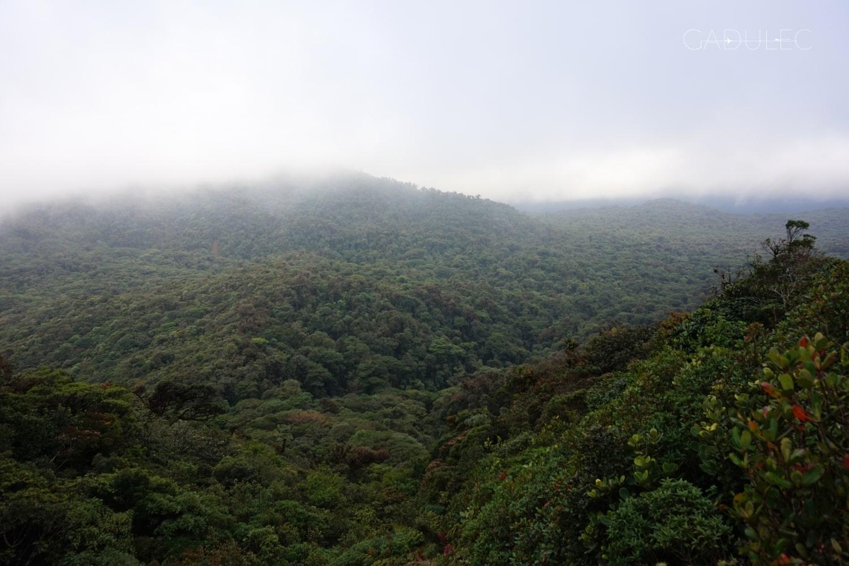 Park Narodowy Monteverde